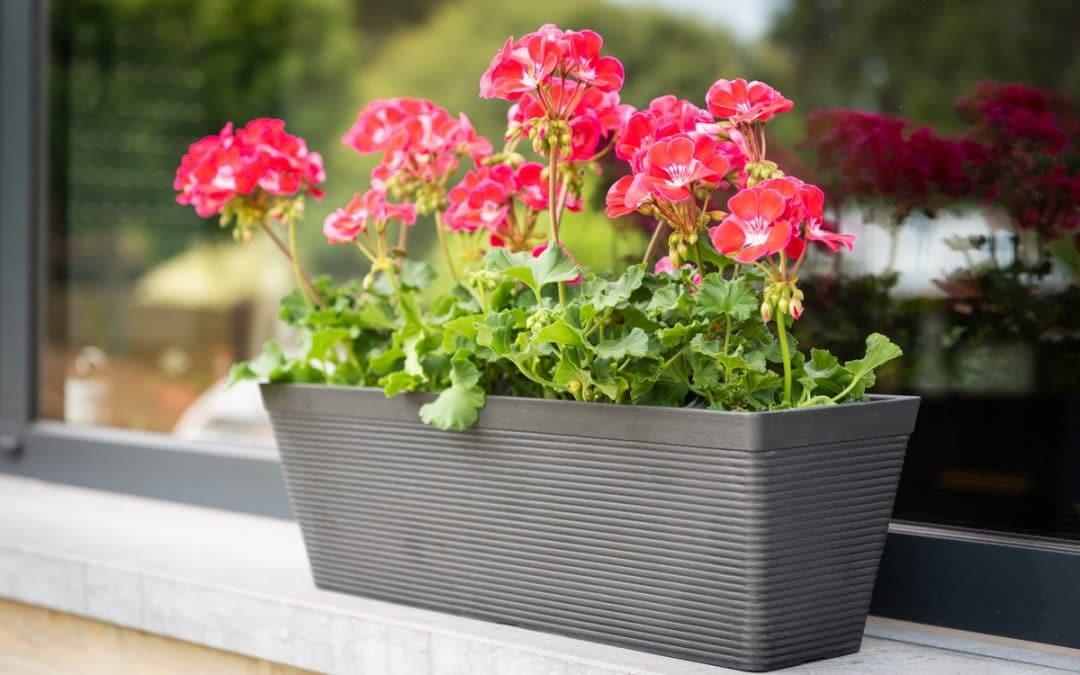 Achetez des pots recyclés avec vos écochèques