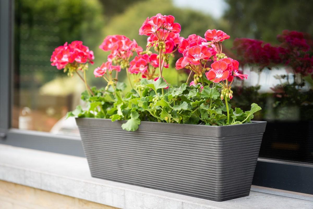 Plantes Fleuries En Pot Exterieur jardiner en ville : c'est bon pour le moral - garden id