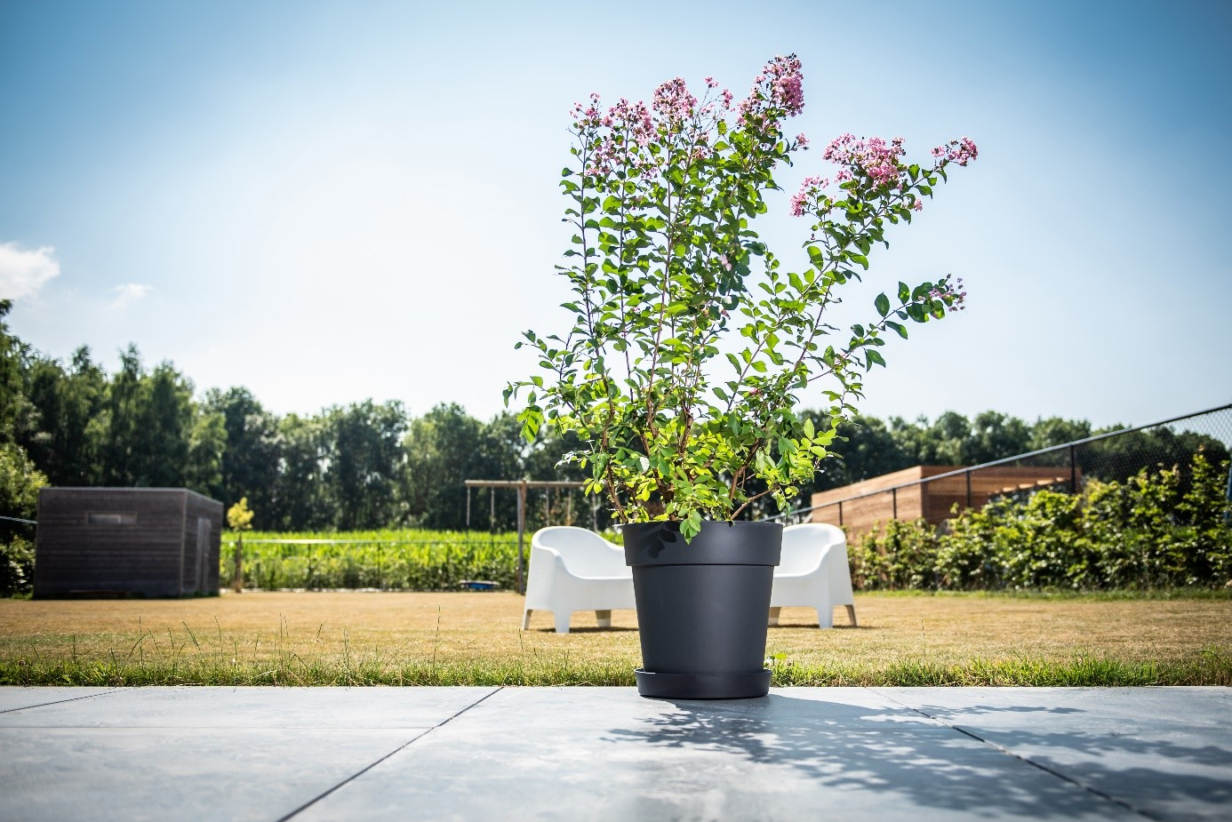 Arbre Fruitier En Pot Interieur porte plante à roulettes en bois, métal ou plastique - garden id