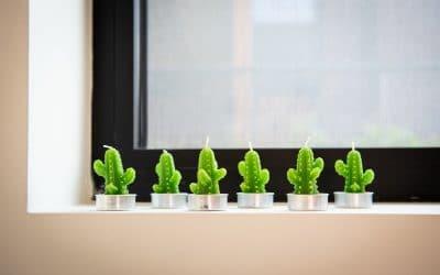 Cactus et succulentes : la tendance déco qui dure