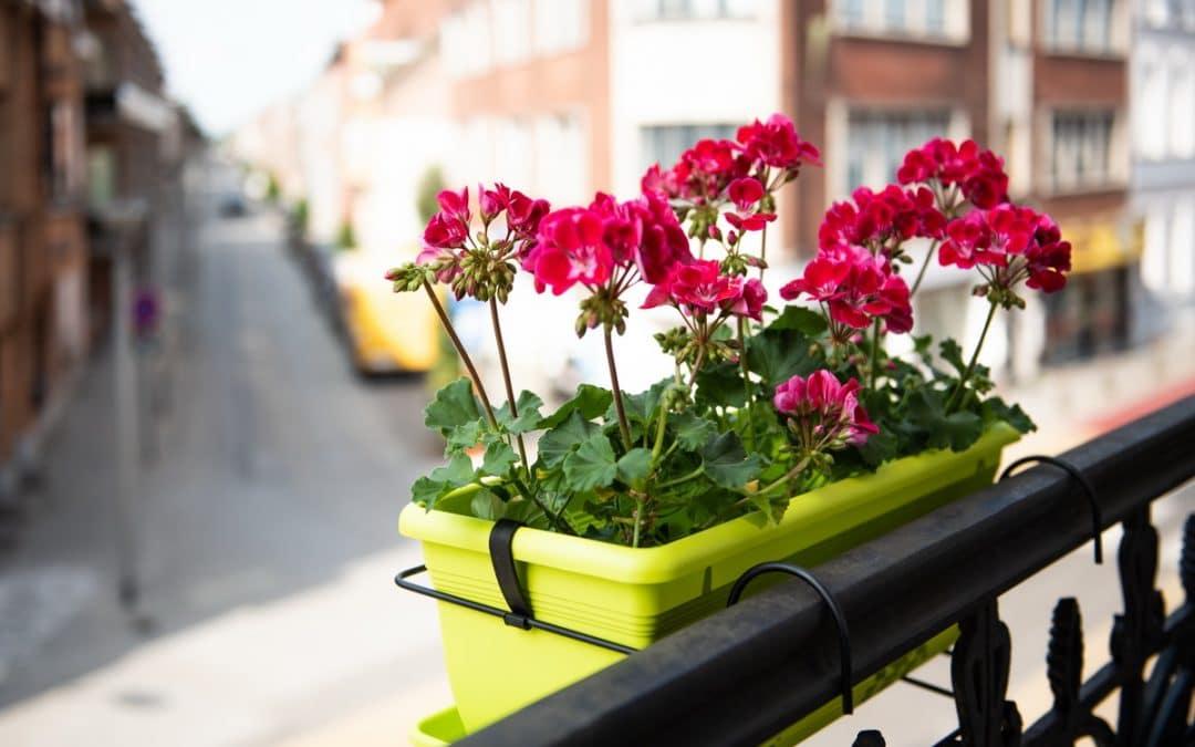 Jardiner en ville : c'est bon pour le moral