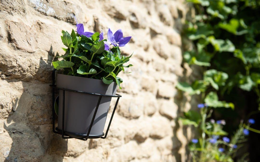 Jardin mural fleuri : l'essence du jardinage vertical