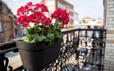 Pots et jardinières pour balcon. Que choisir ?