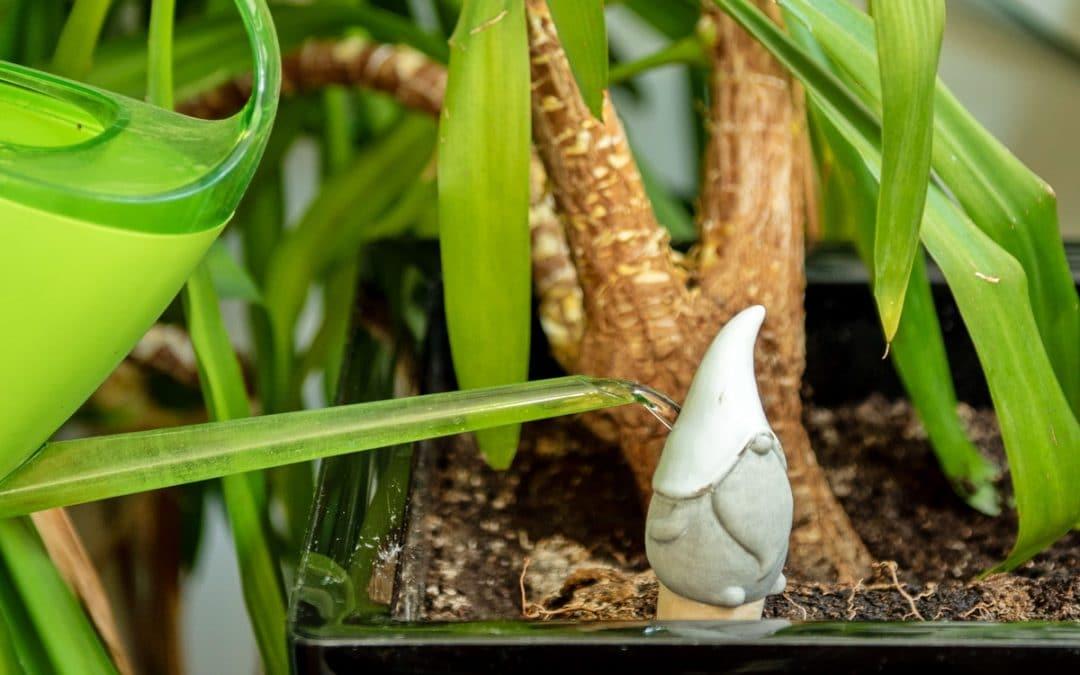 Bien arroser les plantes en pot en été