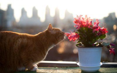 Chat et plantes : bonnes & mauvaises pratiques