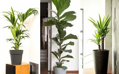 Plantes d'intérieur tendance en 2021