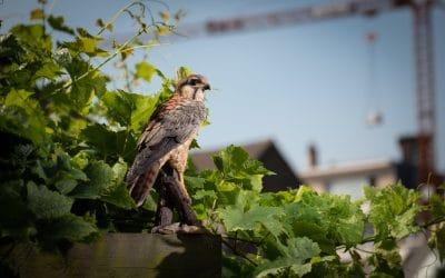Le boom des animaux décoratifs en polyrésine