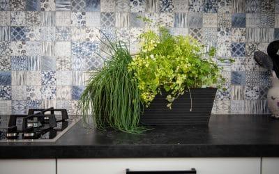 9 plantes aromatiques faciles à cultiver en pot