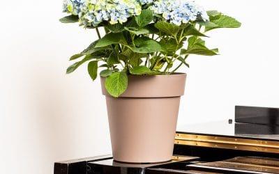 Guide pratique: choisir le bon pot pour chaque plante